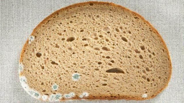 هل يمكن تناول الجزء الجيد من الخبز المتعفن؟